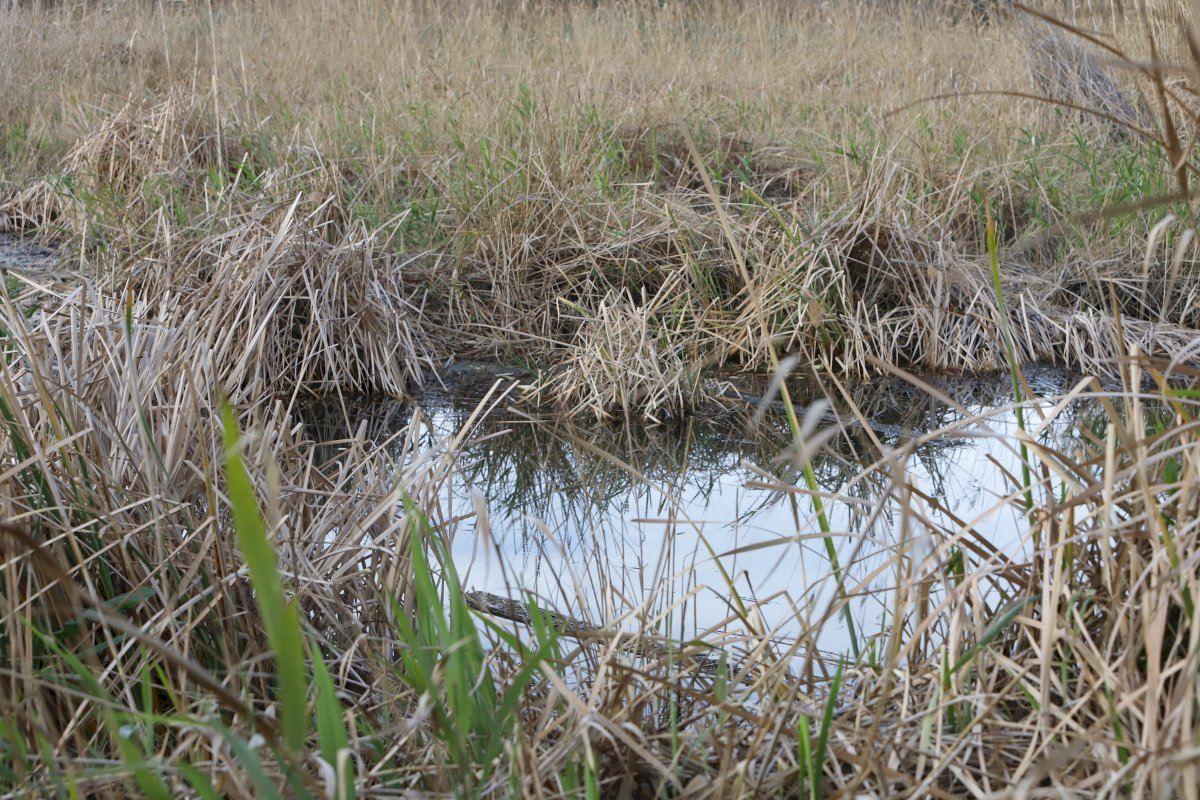 El Consorcio gestor del Paisaje Protegido de la Desembocadura del río Mijares recibe una subvención de 43.000 € para recuperar el ecosistema de la laguna de la Gola Norte