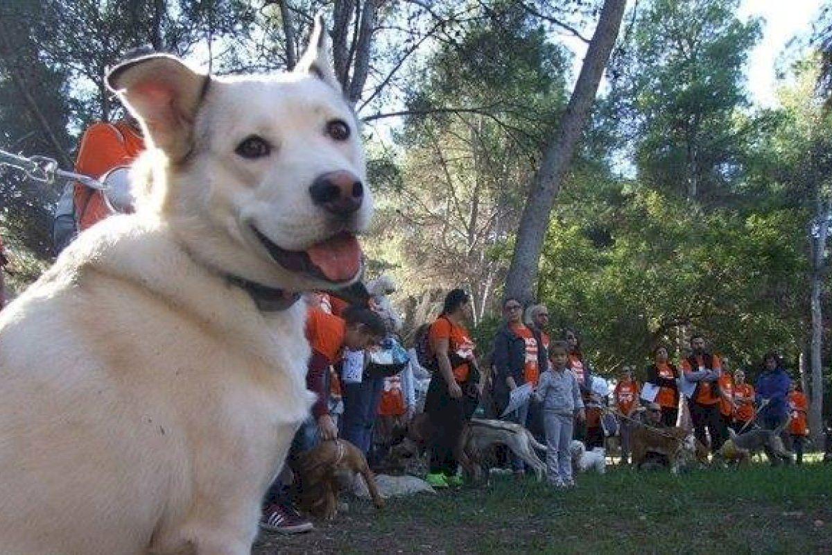 Vila-real impulsa la adopción animal con una feria el domingo 26 de septiembre