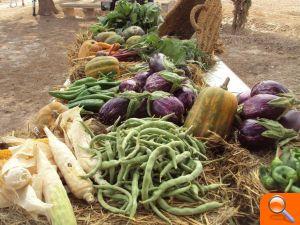 Jornada para emprendedores agrícolas en Mutxamel - el periodic
