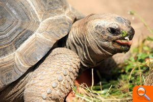 Las tortugas de aldabra estrenar n hogar en el nuevo for Oceanografic telefono