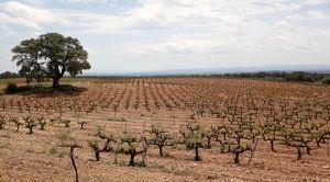 El Consell destina 72 millones de euros al sector agroalimentario entre enero y julio